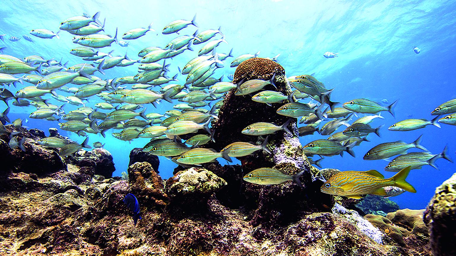 Mar Vivo deslumbra con fotografías submarinas