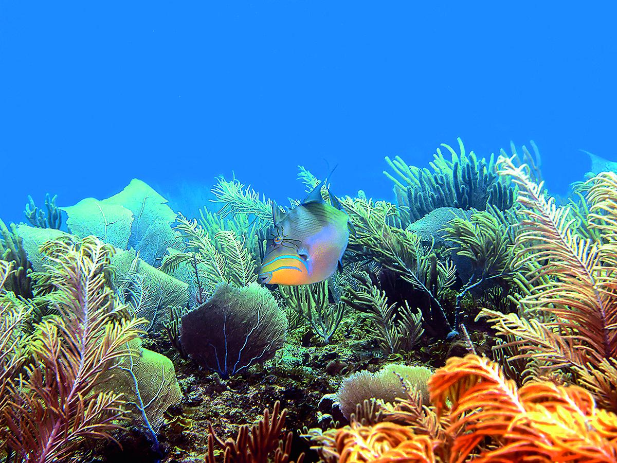 Mar vivo en nuestros arrecifes