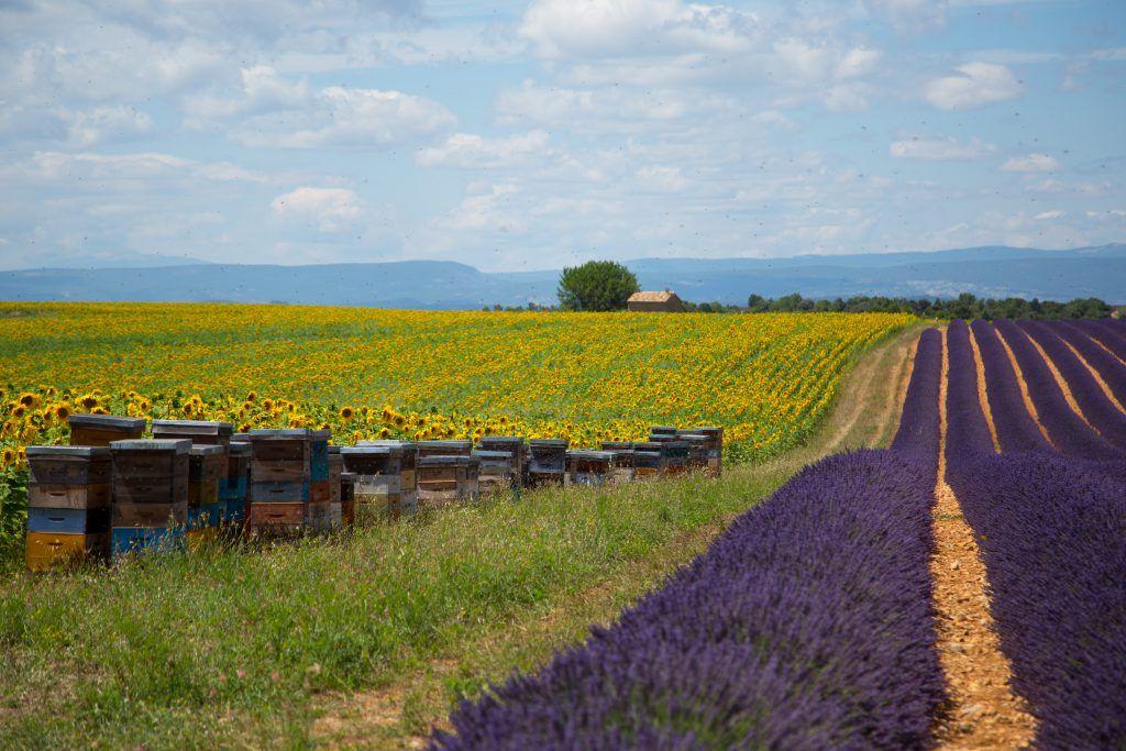 bees_outside_aix-en-provence