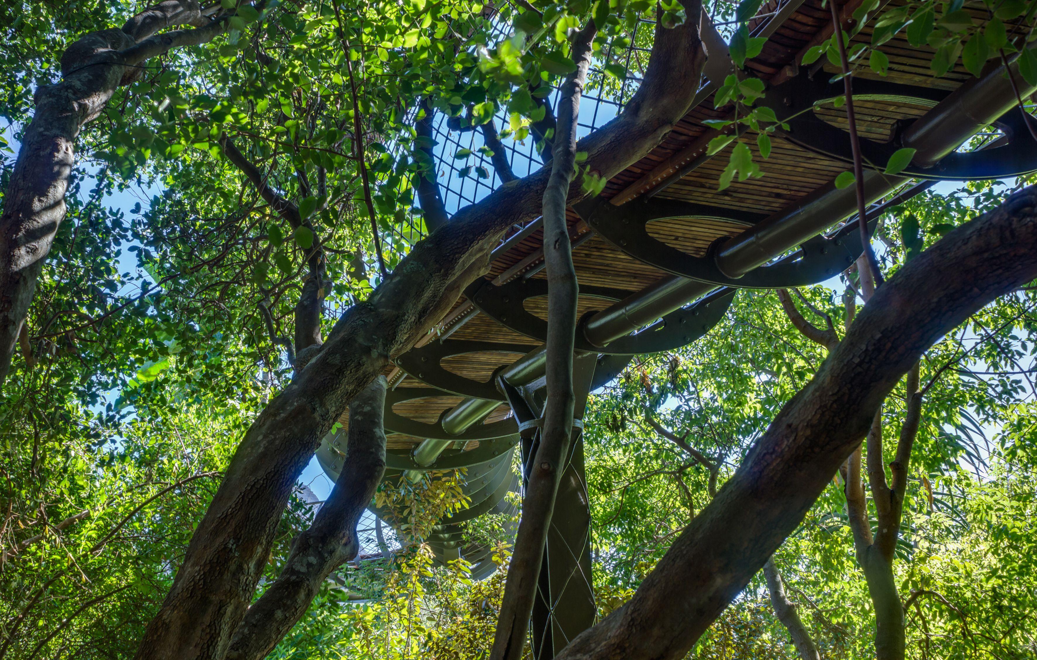 África: Paseando sobre un mar de árboles