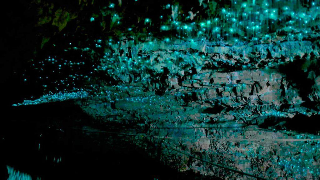 Las cuevas de Waitomo